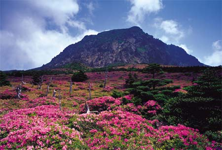 Situated in the heart of Jeju Island, Mount Hallasan 1,950 meters is